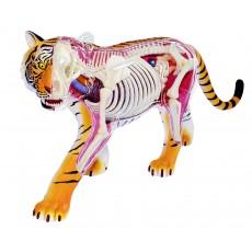 Объемная анатомическая модель Тигр, 4D Master 26105