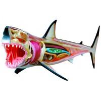 Объемная анатомическая модель Большая белая акула, 4D Master 26111