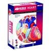 Объемная анатомическая модель Сердце человека модель 26052, 4D Master 26052