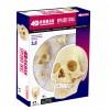Объемная анатомическая модель Череп человека, 4D Master 26086