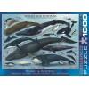 Пазл  Киты и дельфины 1000 элементов, EuroGraphics 6000-0082