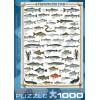 Пазл  Пресноводные рыбы 1000 элементов, EuroGraphics 6000-0312