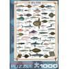 Пазл  Морские рыбы 1000 элементов, EuroGraphics 6000-0313