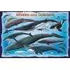 Пазл  Киты и дельфины 100 элементов, EuroGraphics 8100-0082