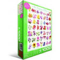 Пазл  Язык цветов 1000 элементов, EuroGraphics 6000-0579