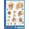 Пазл Цубаки Харуйо Морита, 1000 элементов, EuroGraphics 6000-0306