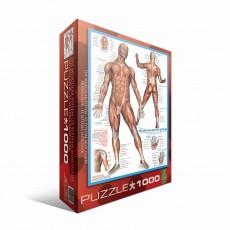 Пазл Книжный мир 2000 элементов, EuroGraphics 6000-2015